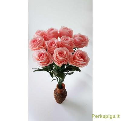 Rožė su kotu, šv persikinė sp., 10 vnt