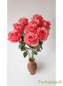 Rožė su kotu, ryški persikinė sp., 10 vnt