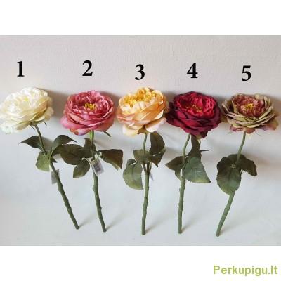 Pinavijinės rožės su koteliu