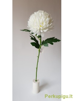 Chrizantema karališka su kotu, 67 cm