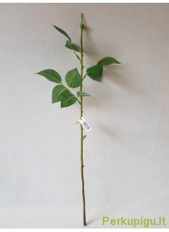Rožės kotas su trijais lapais 55 cm