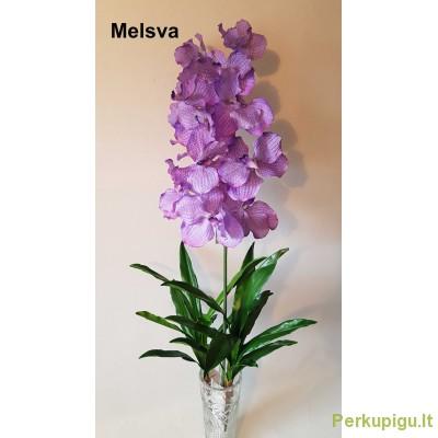 "Orchidėjos šaka latelsinė ""Dalia"", melsva sp., 1925"