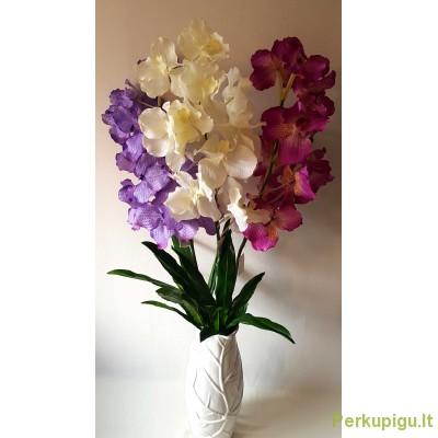 """Orchidėjos šaka latelsinė """"Dalia"""", violetinė sp., 1925"""