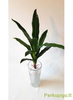 """Orchidėjos lapai """"Dalia"""""""