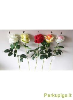 Rožė satininė su kotu