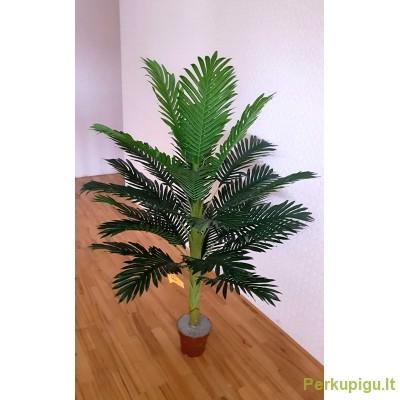 Medis palmės, 1.15 m.