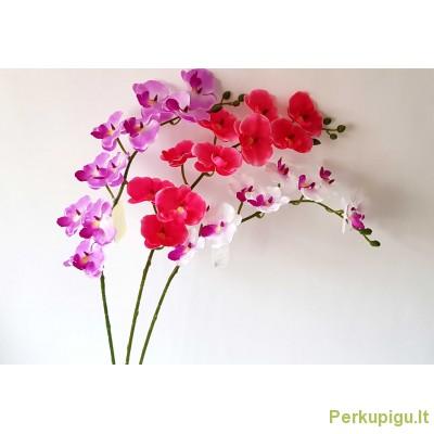 Orchidėjos šaka mažesniais žiedais